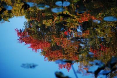 reflected-trees.jpg