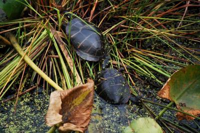 two-turtles.jpg