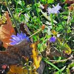 HDR wildflowers