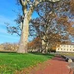 Brick path and London plane trees