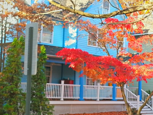 Autumn leaves and a blue house